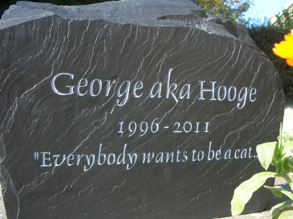 heavy slate gravestone made for hooge the cat